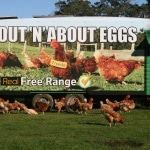 OUT 'N' ABOUT EGGS